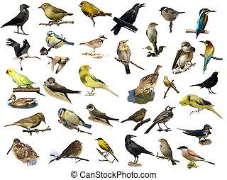 (35), witte , vogels, vrijstaand