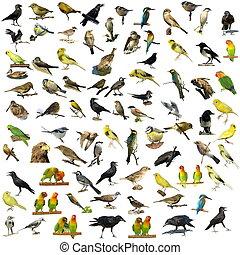 81, foto's, vrijstaand, vogels