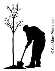 aanplant, man, jonge, boompje