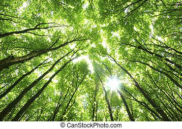 achtergrond, groene bomen