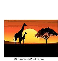 afrika, ondergaande zon , safari