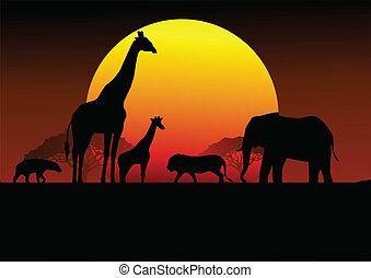 afrika, safari, silhouette