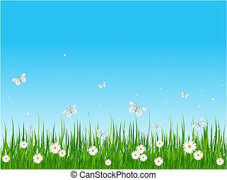 akker, grassig, vlinder