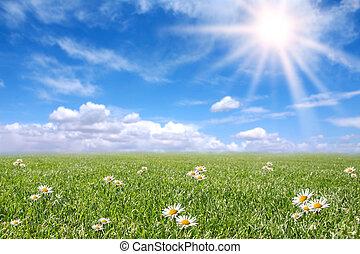 akker, lente, zonnig, sereen, weide