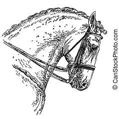 andalusian, paarde, tekening, illustratie, hand
