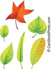 anders, zes, bladeren