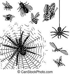 antieke , insecten, set, (vector)