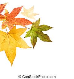 autumn leaves, herfst