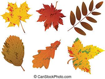 autumn leaves, vector, set