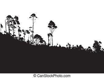 backgro, berg, boompje, tropische