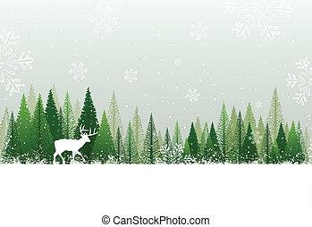 besneeuwd, bos, achtergrond, winter