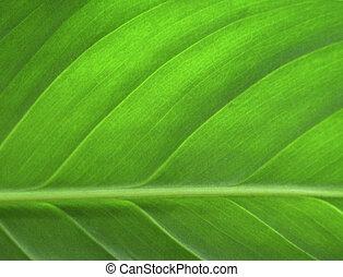 blad, closeup, groene