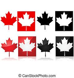 blad, esdoorn, canadees