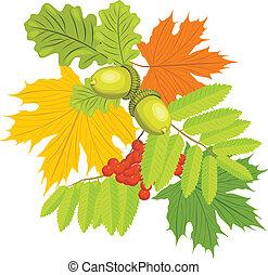 bladeren, rowan, eikels, esdoorn