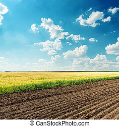 blauwe , velden, hemel, diep, bewolkt, onder, landbouw