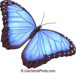 blauwe , vlinder, morpho