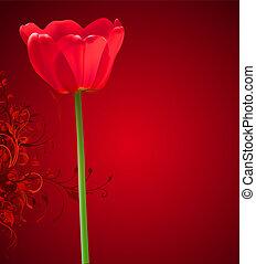 bloem, achtergrond., illustratie, valentijn, tulp, vector, dag, rood