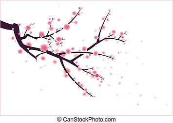 blossom , plum/cherry
