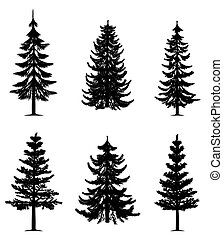 bomen, verzameling, dennenboom