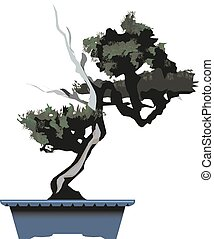 bonsai, dennenboom, vector, boompje, illustration.