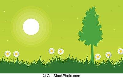 boompje, bloem, silhouette, landscape, lente