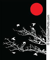 boompje, silhouette, vogels, maan