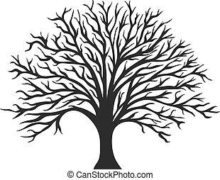 boompje, voorwerp, silhouette, eik