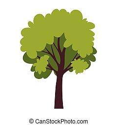 boompje, witte achtergrond