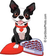 boston terrier, dag, valentijn