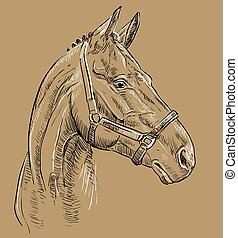 bruin paard, 27, verticaal