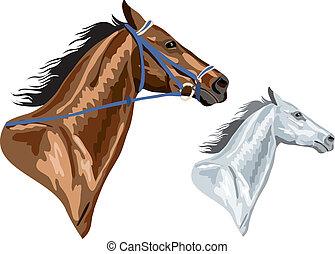 bruin paard, hoofden, -, twee, eps, versie, toom, white., verwijderde, groenteblik