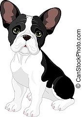bulldog, franse