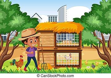 chicken, werkende , jongen, scène, boerderij