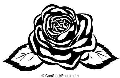 close-up, abstract, rose., vrijstaand, zwarte achtergrond, witte