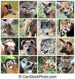 collage, mammals, dier