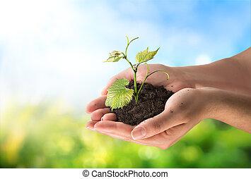 concept, landbouw, weinig; niet zo(veel), plant