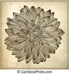 dahlia, bloem, grunge, tekening, achtergrond
