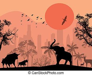 de stad van het park, dieren, wild