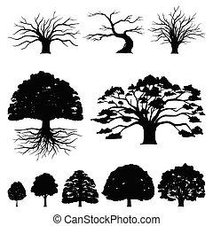 eik, detail, boompje, natuurlijke , illustratie, silhouette