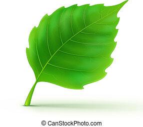 gedetailleerd, groen blad