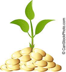 geld plant, groene, jonge