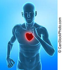 gezond hart, concept