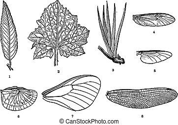 gravure, bladnerf, ouderwetse , vleugel ader