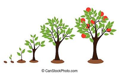 groei, boompje