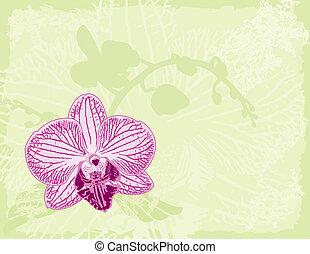 groene achtergrond, orchidee