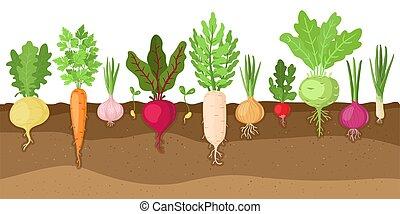 groente, systeem, veggies, vezelig, illustratie, groentes, structuur, vector, set, geplante, spotprent, groeiende, wortel, vegetables., terrein