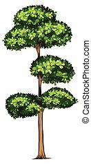 groot, witte , boompje, achtergrond