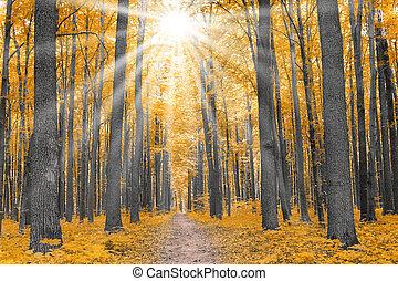 herfst, nature., bos