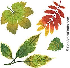 herfst, vector, set, vellen