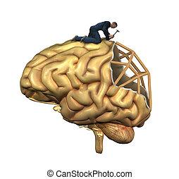 hersenen, wederopbouw